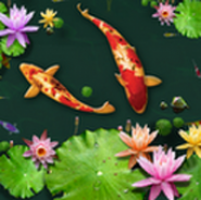 3D Fish Ponds Live Wallpaper