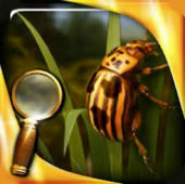 Treasure Island : The Golden Bug - Extended Edition