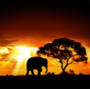 African Sunset LiveWallpaper