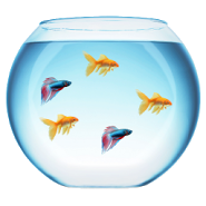 My Fish Bowl Live Aquarium