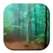 Forest Live Wallpaper 3D