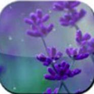 Rain Drop n Flower LWP