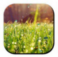 Galaxy S4 Rain n Grass LWP