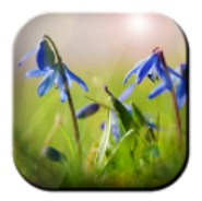 Blue Flowers Free LWP