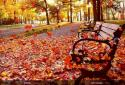 Autumn Pro Live Wallpaper