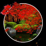 Zen Garden -Fall- LW