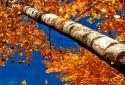 Прекрасная осень Живые обои / Beautiful Autumn