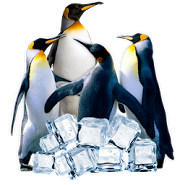 Arctic Penguin Live Wallpaper