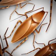 Roaches Rush
