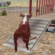 Farm Animals Transporter Truck