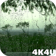 4K Rain Video Wallpaper