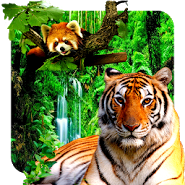 3D animals parallax live wallpaper