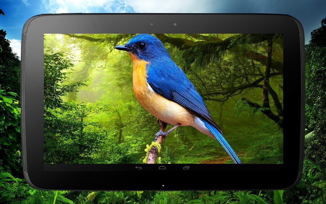3D birds parallax live wallpaper скачать 1.0.0 APK на Android