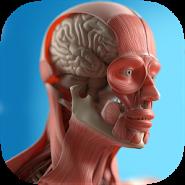 Анатомія Game Anatomicus Pro