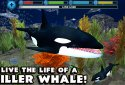 Orca Simulator
