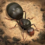 The Ants: Underground Kingdom