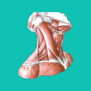 Easy Anatomy v1.1.0  Оригинал (2021).