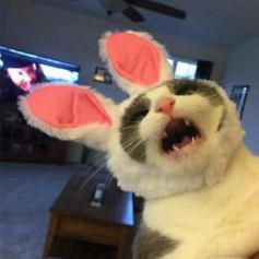 Kot v ywax