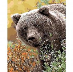 Медведь плей