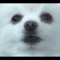 SnowDog