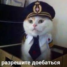 кот с военкомата